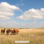 Horses In Nebraska