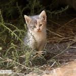 Kittens In The Barn