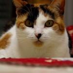 Kitty's Film Debut