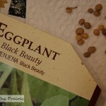 Starting Plants From Seed