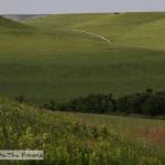 The Konza Prairie