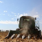 Corn Harvest Video
