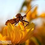 Prairie Bugs