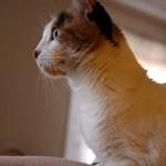 Kitty On High-Alert