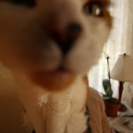 Kitty and the Wide Angle Lens