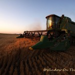 Wheat Harvest Video