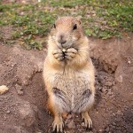 The Ranch Store Prairie Dog Town