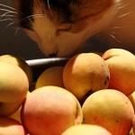 Free Peaches
