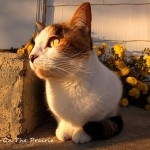 Kitty's Anniversary