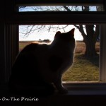 Kitty's Window On The World