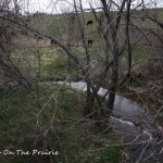Terrapin Creek