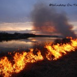 Video of Controlled Burn