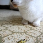 Kitty And The Grasshopper
