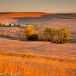 Fall Morning On The Tallgrass Prairie
