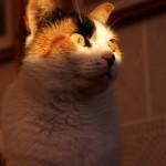 Kitty In The Morning Sun