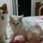 Kitty & Muffin….Playing!