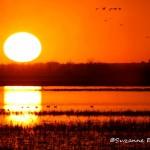 Sunset At Squaw Creek