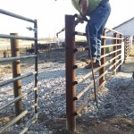 Cattle Working Facility – Part 4